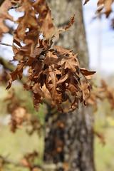 Colori dell'autunno…