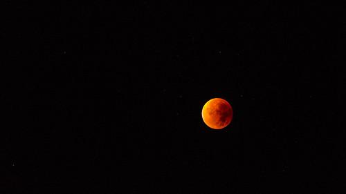 Harvest Blood Moon