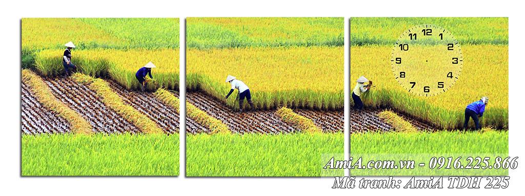 AmiA 225 - Tranh quê hương thu hoạch lúa vụ mùa ở Việt Nam