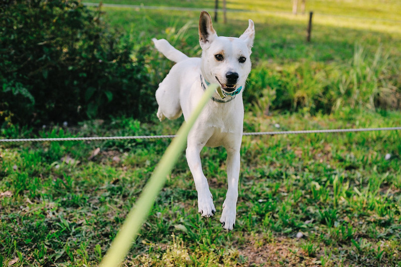 Ice the Dog in jumping mode