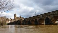 Puente Romano, y crecida rio Tormes