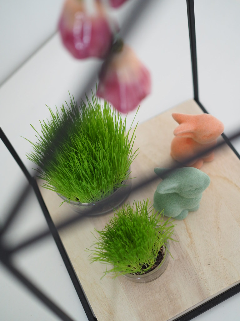 rairuoho-istutusidea