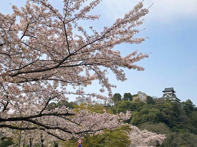 犬山城と桜 IMG_0197_2