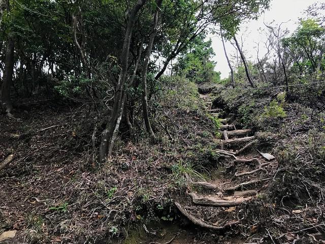 仙ヶ岳 仙鶏尾根 丸太階段