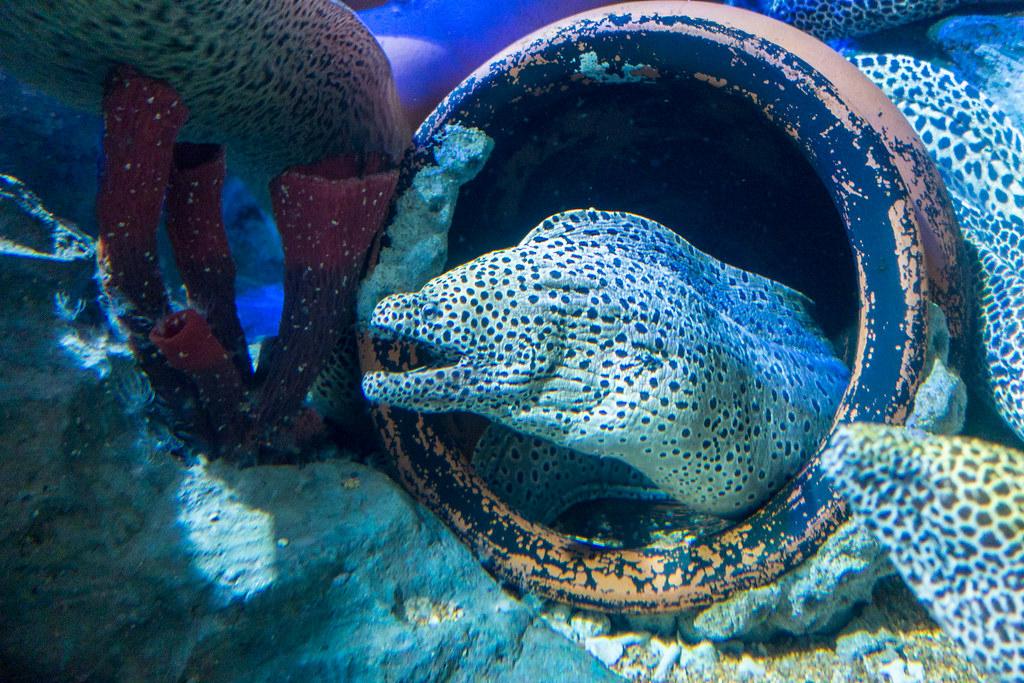 Random photo from Day 8 - S.E.A Aquarium & Sentosa album