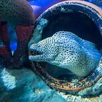 Primary photo for Day 8 - S.E.A Aquarium & Sentosa