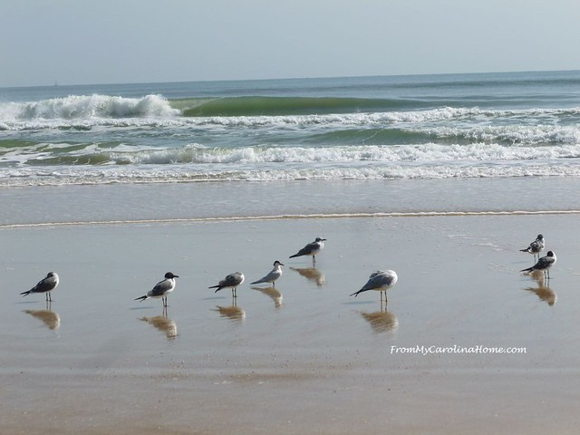 Ormand Beach Florida at From My Carolina Home