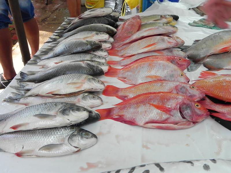 El mercado de pescados continúa vigente