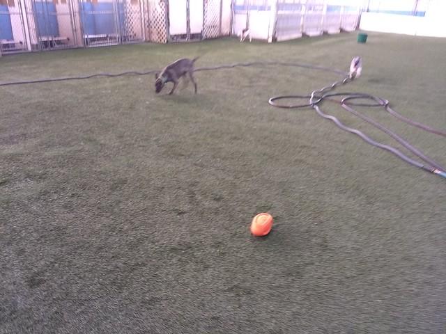 03/22/18 Football Play :D