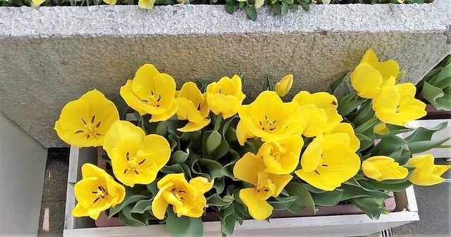 濱松花卉主題公園 (17)