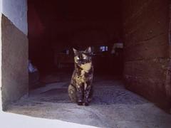 Mouchette, l'écaille de Tortue • #portrait #portraitmood #catportrait #cat #catstagram #catsofinstagram #catlovers #catwoman #blackcat #lovecats #catsofworld #instagramcats #instacats #miaou #xaintrie #zecorreze #correze #oldhouse #light #lightpainting #e