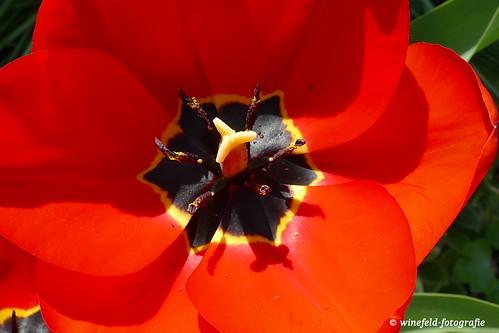 Frühlingszeit / Springtime