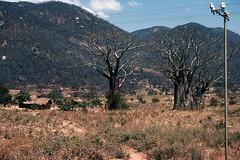 Huts and baobab trees, Malawi, 1975