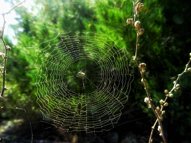 the spider's web..(not www)