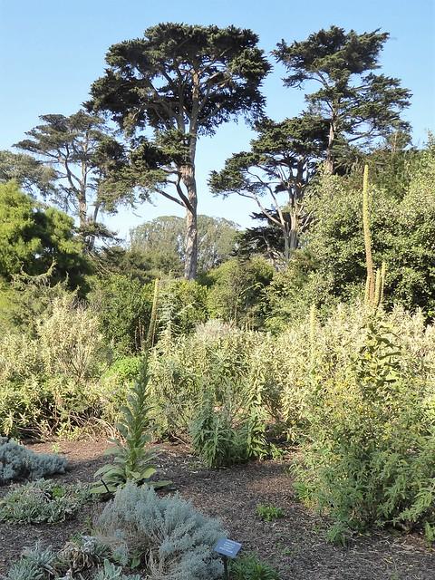 San Francisco, CA, Botanical Garden, Landscape