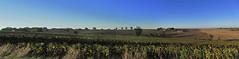 20120916 19 067 Jakobus Hügel Bäume Sonnenblumenfelder_P01 - Photo of Giscaro