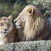 Mbali and one of his wives by Tambako the Jaguar