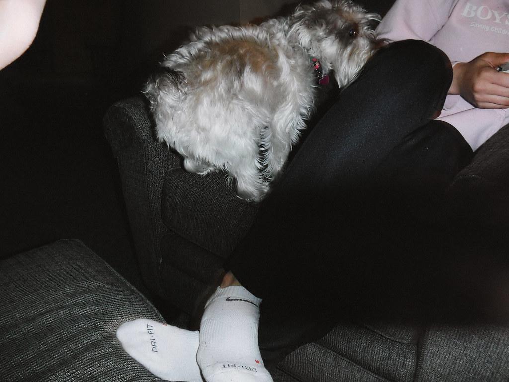 Missy in a lap