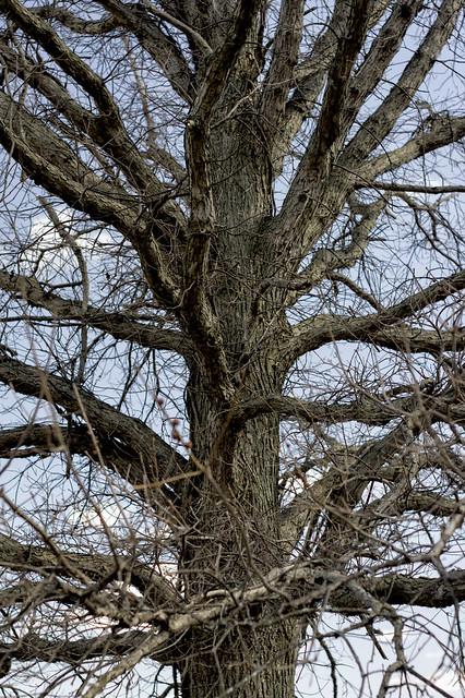 Golem Tree