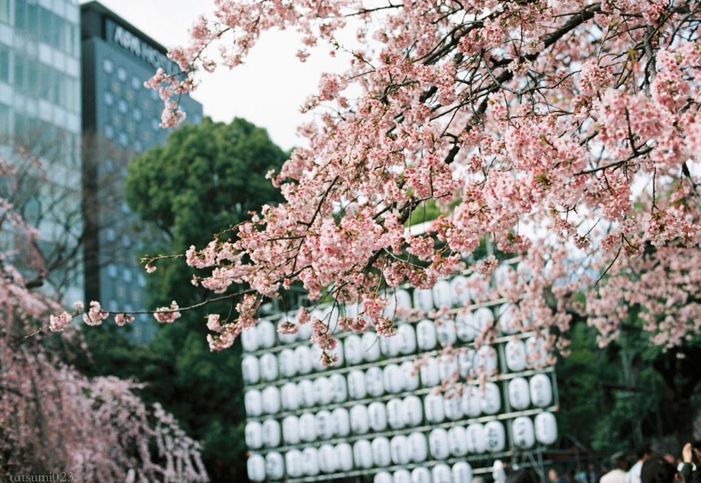 2018-03-17 上野公園桜模様 KODAK PORTRA 160 005