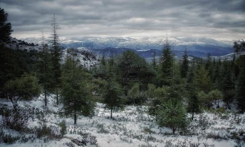 336. La Alfaguara. Parque Natural de la Sierra de Huétor.