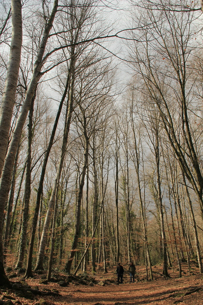 Beech forests, Garrotxa Natural Park
