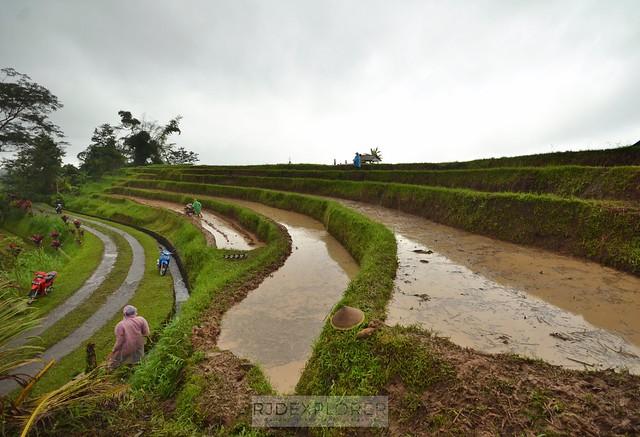 bali itinerary Jatiluwah Rice Terraces