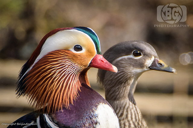 Mr & Mrs Mandarin