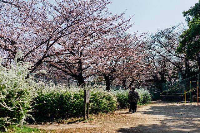 Sakura07_55mm