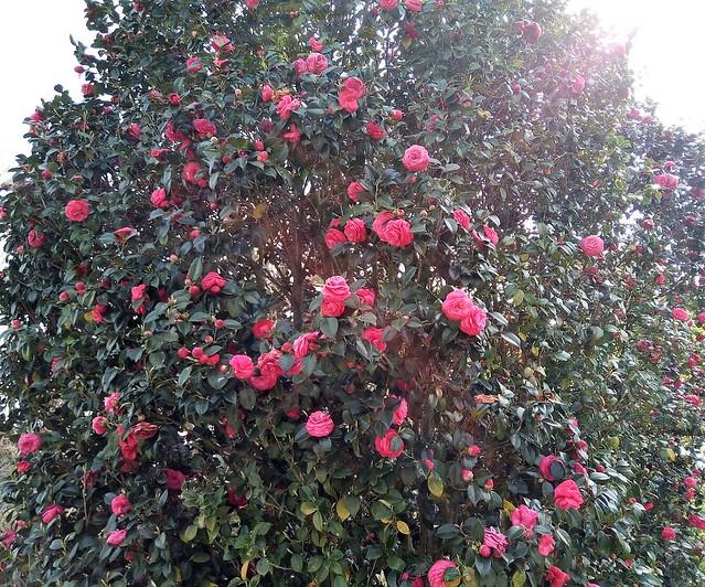 濱松花卉主題公園 (3)