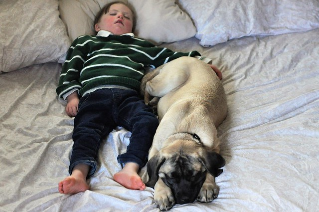 Best dogs for kids who have Down syndrome