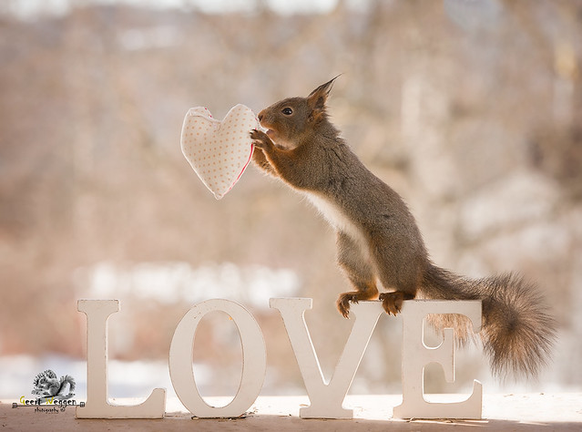 red squirrel with a heart on the word love