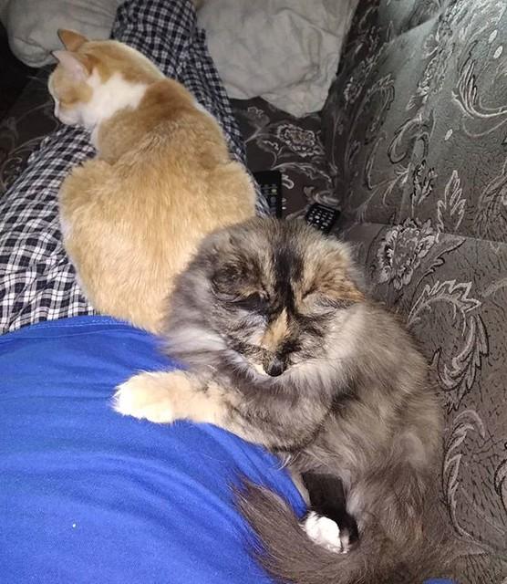 Кошки ждут ужина. А чтобы ненароком не пропустить момент, контролируют все мои перемещения по квартире. Переместились вот вместе со мной на диван и контролируют :-)