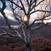 Loch Leven Trees by Tim Parkin