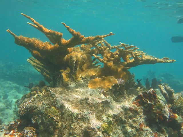S caicos snorkel 005