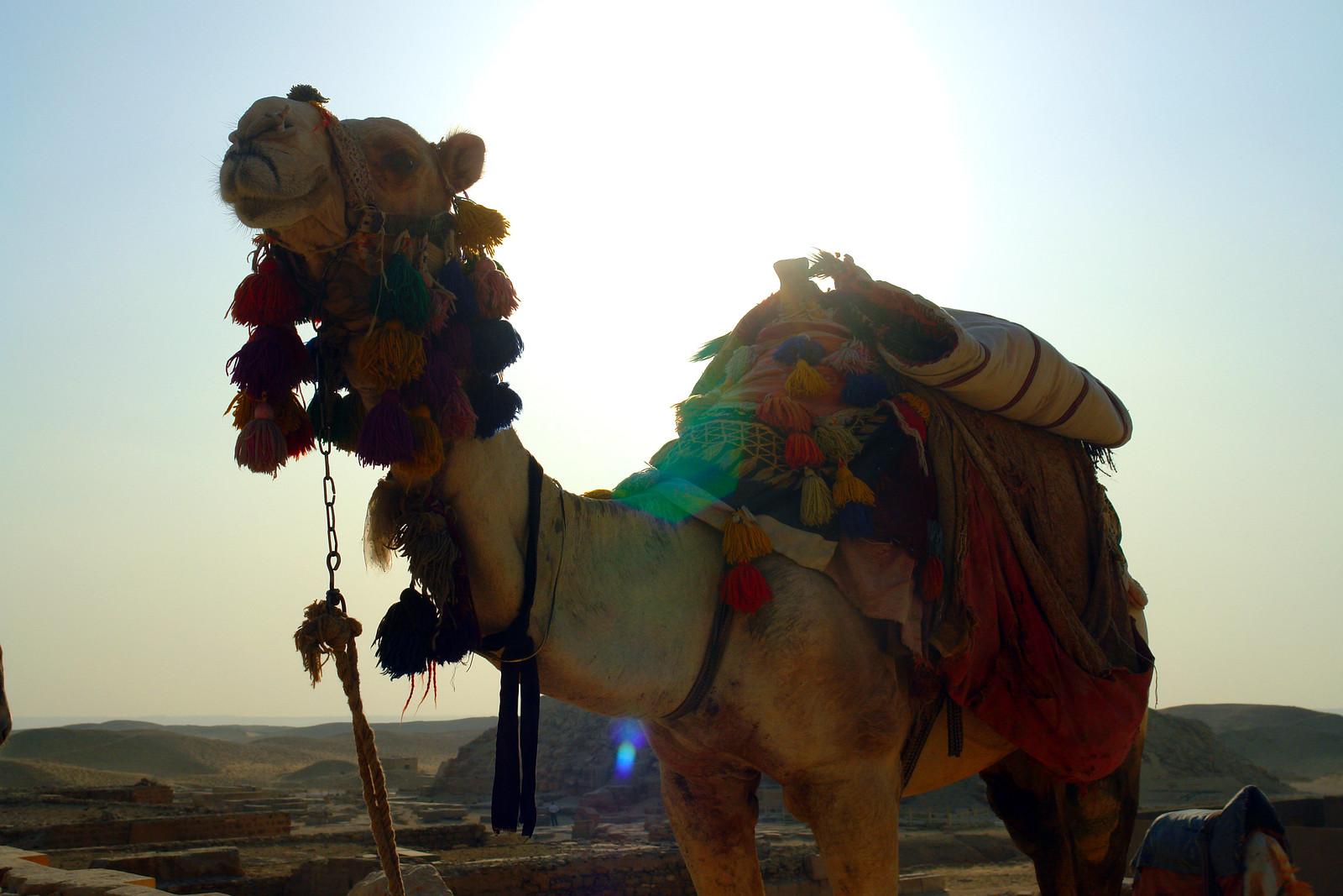Qué ver en El Cairo, Egipto lugares que visitar en el cairo - 26122602007 99e9736d05 h - 10+1 lugares que visitar en El Cairo