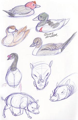 3.7.18 - Disney's Animal Kingdom Sketches