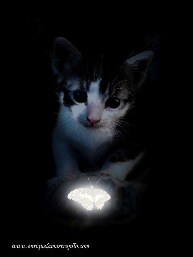 dixi-mariposa-ii-noche-negra-flickr