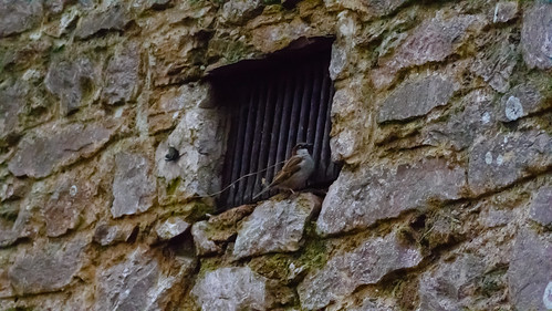 Sparrow at grating
