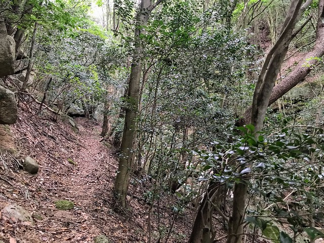 仙ヶ岳 南尾根 登山道