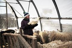 Bonnieview Shearing Day_0180