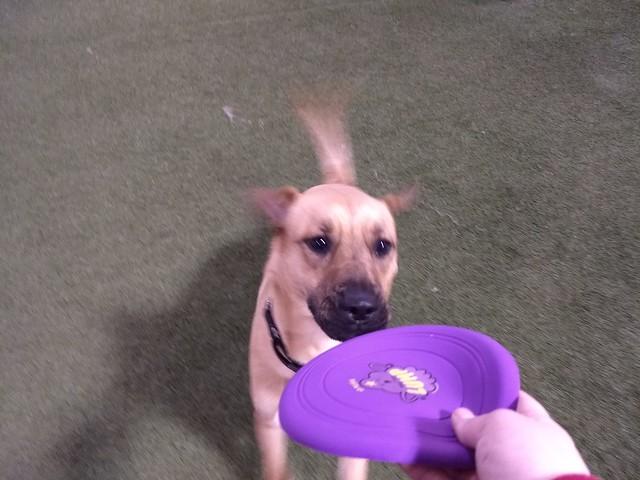 03/25/18 Frisbee Catch :D