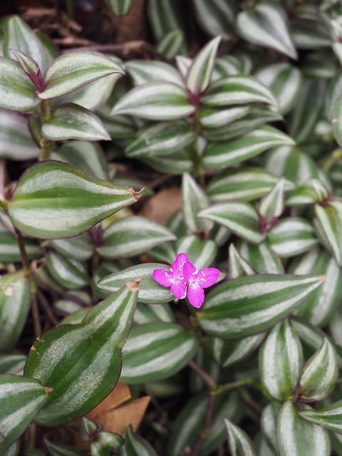 Sat, 2018-02-24 12:22 - Brooklyn Botanic Garden