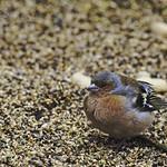 20180404-173657 - Bird Bokeh