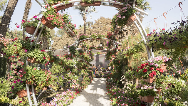 Under the arcs of flowers in Egypt's Flowers Fair 2018