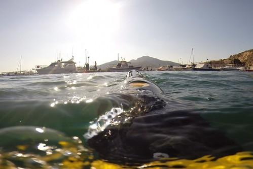 La Cátedra de Medio Ambiente ayuda al Puerto a estudiar el ruido submarino