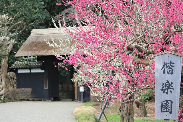 kairakuen-umed001