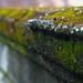Mossy Stone Ledge