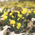 20180317-122206 - Blumen, Laub & Schnee - März Bokeh