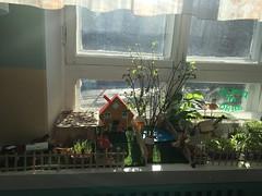 Соловьева Александра Викторовна - Огород на окне